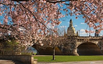 Der Frühling in Dresden erstrahlt in schönen Farben.