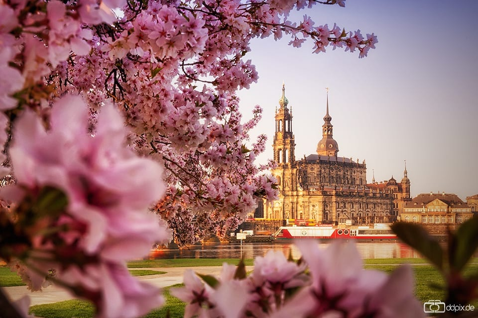 Frühlingsmorgen in Dresden