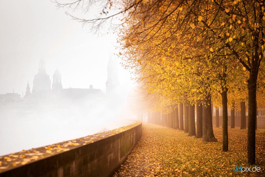 geheimnsivoller Herbstmorgen