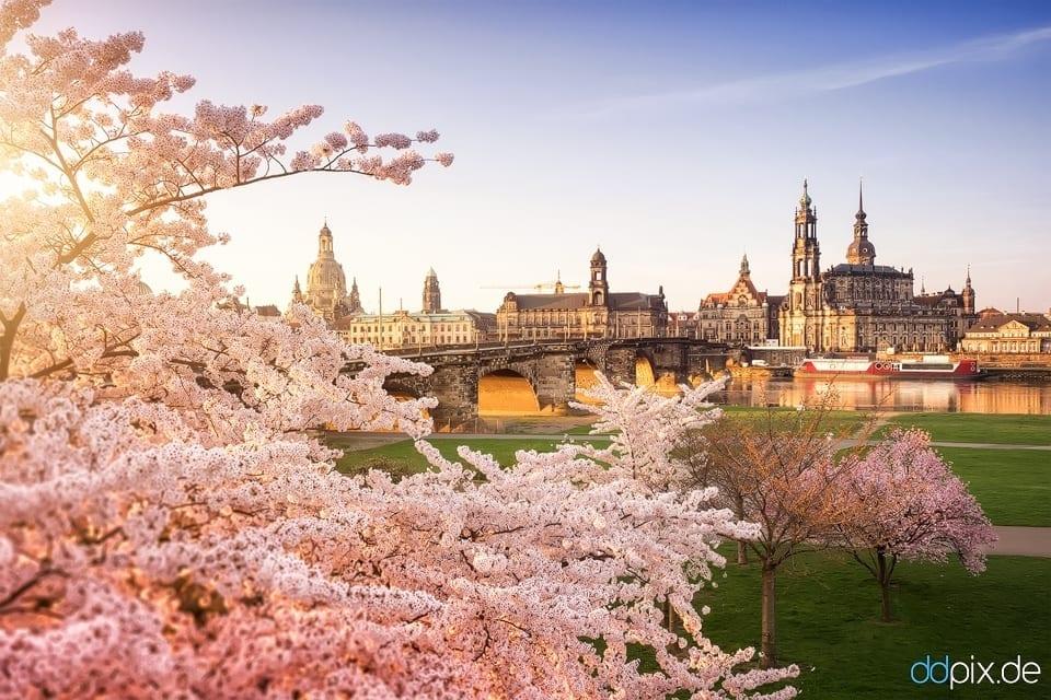 Aprilmorgen am Königsufer