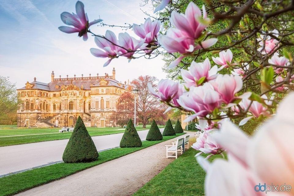 Endlich Frühling in Dresden!